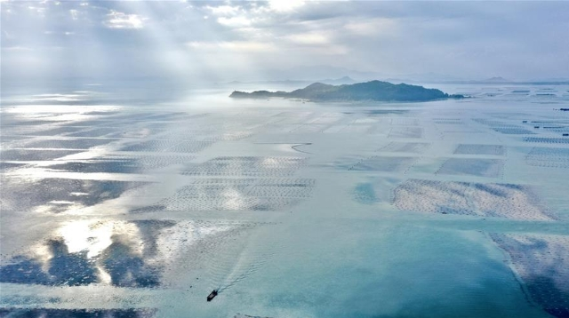 福建东山:光影海上牧场